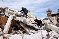 Searching for survivors in the rubble of Haiti's capital Port-au-Prince after the earthquake in Search And Rescue Dogs, Dog Search, Big German Shepherd, Port Au Prince, Work With Animals, War Dogs, Sustainable Development, Family Dogs, Service Dogs
