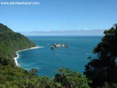 Nouvelle Zélande, la forêt pluvieuse côtière le long de la mer de Tasmanie. www.plantesdusud.com