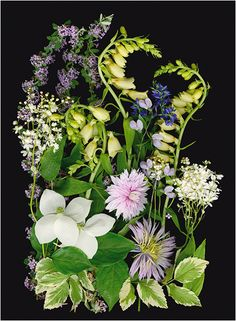 Sandi's Garden - Multicolored Bouquets and Floral Collections - Scanner Photography By Ellen Hoverkamp
