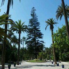 @_JakeBieBer Que haríamos sin arboles en Melilla