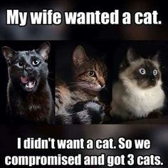 """My wife wanted a cat.  I didn't want a cat.  So we compromised and got 3 cats."" 