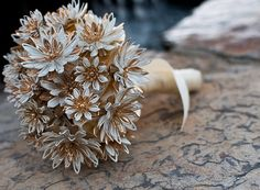 Sarah Coventry Brooch Bouquet  Vintage Water Lily by LionsgateDesigns,