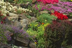 The ideal rock garden for a small yard works like a raised bed that you can place anywhere. Learn how to build the structure and choose the right plants. Landscaping With Rocks, Backyard Landscaping, Backyard Ideas, Arizona Landscaping, Garden Ideas, Patio Ideas, Garden Projects, Container Plants, Container Gardening