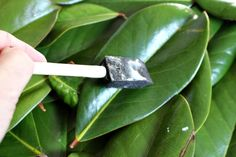 See how easy it is to preserve fresh magnolia leaves and use them in your Holiday Decorating. Use them in garlands, wreaths or make a large wall hanging. Target Christmas Decor, Silver Christmas Decorations, Farmhouse Christmas Decor, Magnolia Leaf Garland, Magnolia Leaves, Fixer Upper, Wonderful Day, Cabin In The Woods, Leaf Crafts
