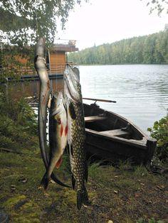 Fishing # Perch # Pike # Jalolautta