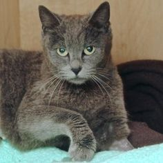 JaidaBuds is an affectionate cat who is available for adoption at our Pacific Heights campus!