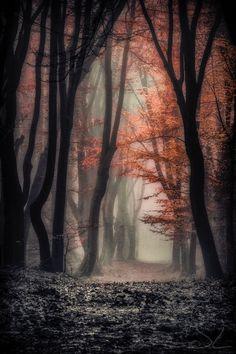 Foggy Autumn by Joost Lagerweij