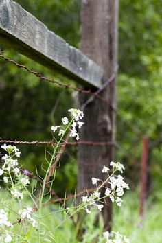 Country Fences, Rustic Fence, Country Walk, Country Life, Country Girls, Country Living, Country Charm, Country Farmhouse, Modern Farmhouse