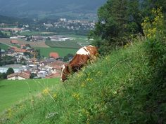 Gruyère, Svizzera Switzerland, Dolores Park, Around The Worlds, Travel, Viajes, Traveling, Trips, Tourism