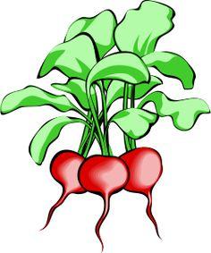 #cultivo de #rabanitos en #huertourbano y #mesadecultivo