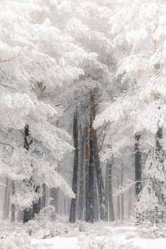 The Snowy Winter Forest - title El Bosque/The Forest - photographer Jose Devesa - - Winter Szenen, Winter Love, Winter Magic, Winter Christmas, Winter Ideas, Winter White, Simple Christmas, Christmas Christmas, Beautiful Landscapes