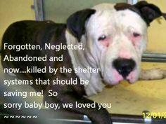 URGENT DOGS OF MIAMI so very sad