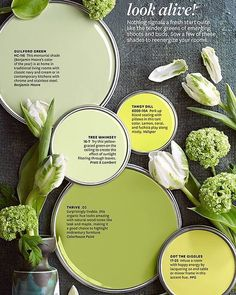Look Alive- Better Homes and Gardens Paint Colors Green Paint Colors, Paint Color Schemes, Paint Colors For Home, Room Colors, Wall Colors, House Colors, Chartreuse Color, Accent Colors, Garden Painting