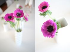 Dining Room Decorating With Anemones Love Flowers, Colorful Flowers, Beautiful Flowers, Bloom Where You Are Planted, Anemone Flower, Kanzashi Flowers, Pansies, Flower Power, Flower Arrangements
