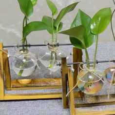 Glass Hydroponics Table Planter Stand Want something special in your home or garden decoration? Check out this Glass Hydroponics Table Planter Stand! Glass Planter, Planter Table, Glass Terrarium, Best Indoor Plants, Indoor Garden, Small Plants, Green Plants, Plantas Indoor, House Plants Decor