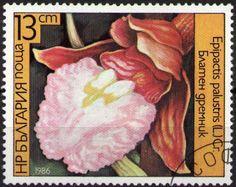 Znaczek: Epipactis palustris (Bułgaria) (Orchids) Mi:BG 3442A,Sn:BG 3141,Yt:BG 2988,Sg:BG 3319,AFA:BG 3350