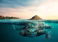 anuncio-animales-biosferas-turismo-ecuador-manipula (4)