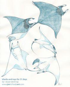 scientific illustration mobula ray - Google Search