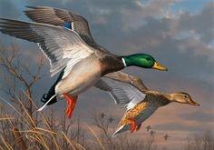 2015 Federal Duck Stamp Contest Entry 074