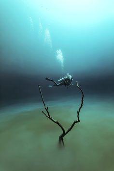 Angelita, Fabrice Guerin, 2016. Cette photographie est issue d'un reportage au Mexique sur les cenotes, grotte d'eau douce. Cette photographie a été notamment primée lors du concours: Underwater photography of the year 2015. Tirage disponible à partir de 99 euros en fonction des finitions, disponible en édition limitée sur www.thechatagallery.com 10% reversés à Sea Shepherd
