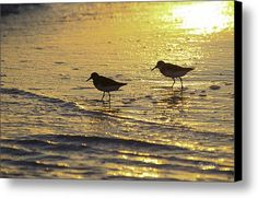 Sandpiper Sunset Canvas Print / Canvas Art By Susan Molnar