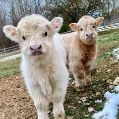 60 Funny Furry Animals To Brighten Your . - 60 Funny Furry Animals To Brighten Your Day Cute Baby Cow, Baby Cows, Cute Cows, Baby Farm Animals, Baby Elephants, Baby Sheep, Garden Animals, Cute Little Animals, Cute Funny Animals