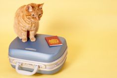 Spring Fever: 10 DIY cat projects | Pets - Yahoo! Shine