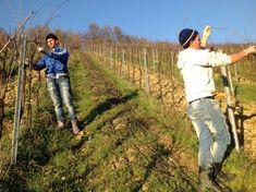 mit metsszunk telen 01 Vineyard, Italy, Wine, Couple Photos, Couples, Couple Shots, Italia, Vine Yard, Couple Photography