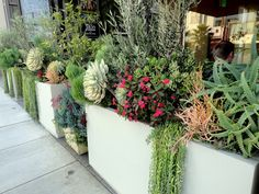 I love these combinations!!! Great ideas for me as I continue to expand my succulent garden.