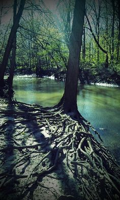 Saline River, Dundee, Michigan