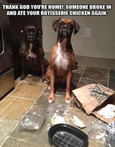 Bad dog..lol (I love the one kinda hiding in the background)