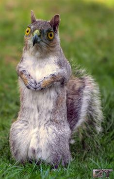 Squawk. | 21 Cute But Vaguely Unsettling Animal Mashups-- THESE THINGS...