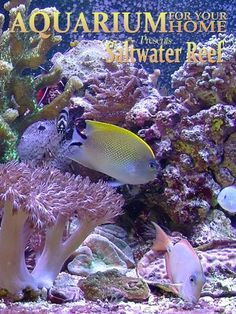 Aquarium for your Home - Saltwater Reef an Aquarium for your Television http://keeplookingbusy.com/itemDetails.aspx?id=B00APN5JQW