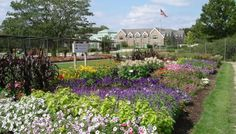 Don't miss the trial and display garden beds at Boerner Botanical Garden in Hales Corners, Wisconsin. they are located to the right of the main gates at Boerner. You'll see lots of new annuals being trialed and a beatiful display of All-America Selections Winners.