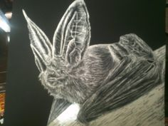 Bat Scratchboard by MrJuniorer on DeviantArt
