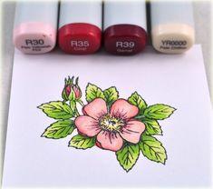Dogwood blossom colors