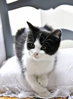 Ah the cuteness of a black & white kitten always gets me!