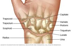 Illustration showing wrist bones