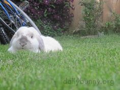 Bunnies quietly enjoy the backyard - May 20, 2015 - More at today's Daily Bunny post: http://dailybunny.org/2015/05/20/bunnies-quietly-enjoy-the-backyard/ !