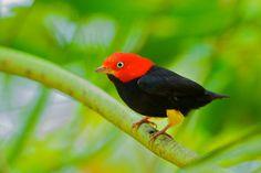 Biologia-Vida: Aves/Birds