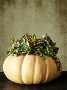 Succulent Pumpkin Arrangement - I still have the evergreen type of sefum in my garden.