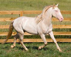 The Horse World: Razas de Caballos II