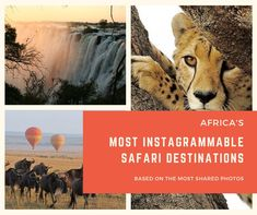 Our Budget African Safari Tours offer the best quality on cheap African safari vacations. From Budget Camping Tours & Lodge Safaris to Africa Overland Tours. Kruger National Park, National Parks, Camping Tours, African Safari, Zimbabwe, Africa Travel, Tanzania, Adventure Travel, Budgeting