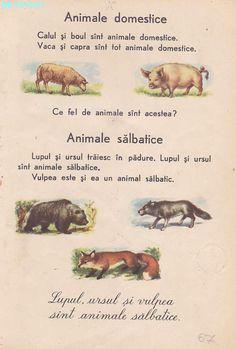 Abecedar 1959 – Un zâmbet de copil… Vintage School, Kids Education, Book Illustration, Vintage World Maps, Nostalgia, Parenting, Classroom, Learning, Books