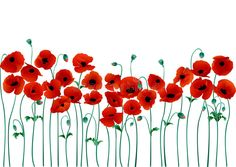 Illustration about Red poppies on a white background vector illustration. Illustration of family, heraldic, flowers - 12779478 Free Vector Graphics, Free Vector Art, Poppy Drawing, Poppy Images, Illustration Blume, Floral Illustrations, Gravure, Red Poppies, Watercolor Flowers