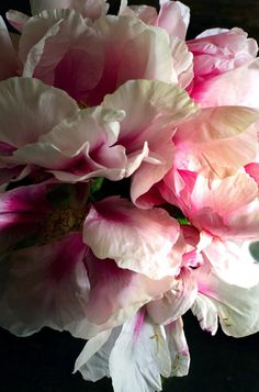 Pretty in Pink Peony