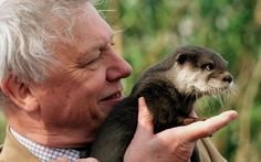 - Meet Sir David Attenborough, or hold an otter.  Either is good.