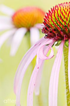 Macro Photography: Editing Flowers with PS