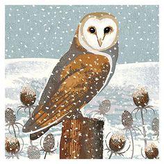 Image result for barn owl illustration
