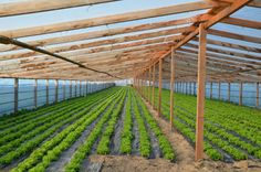 Raised Bed, Raised Garden Beds, Tunnel Greenhouse, Farming, Om, Vineyard, Gardens, Pasta, Outdoor